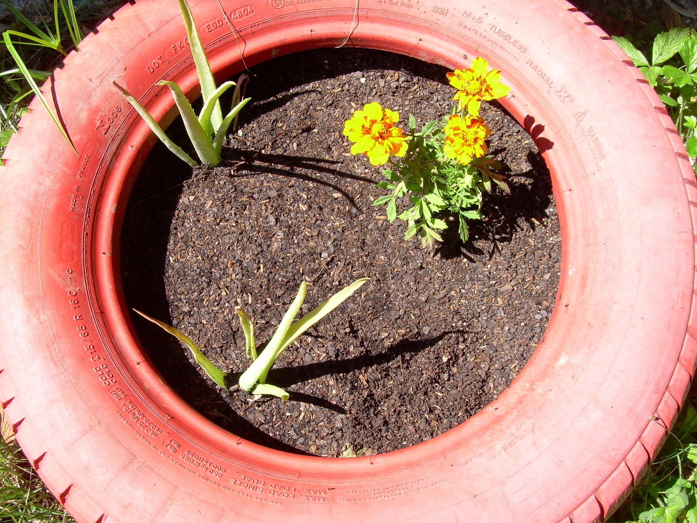 Activitat d'horticultura a la residència infantil Joan Riu